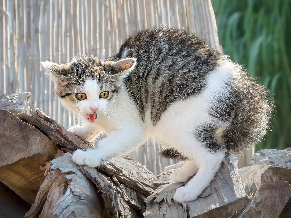 addomesticare gatto selvatico
