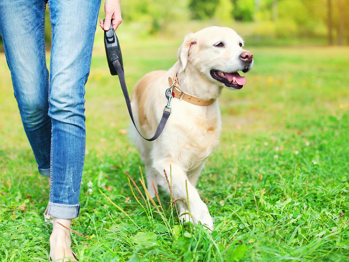 addestrare cane guinzaglio
