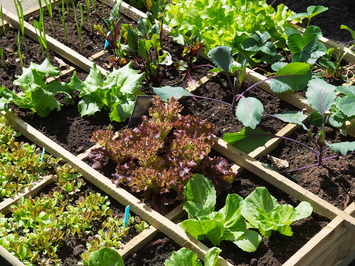 come fare orto