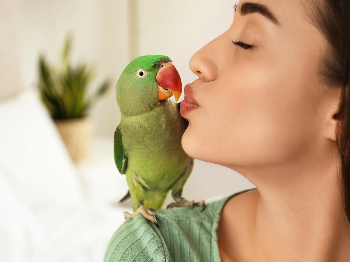 pappagallo domestico