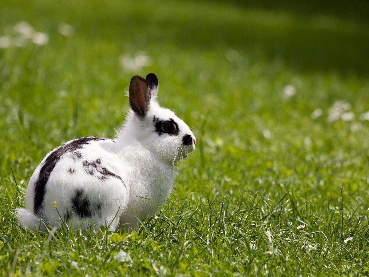 riconoscere malattie coniglio nano