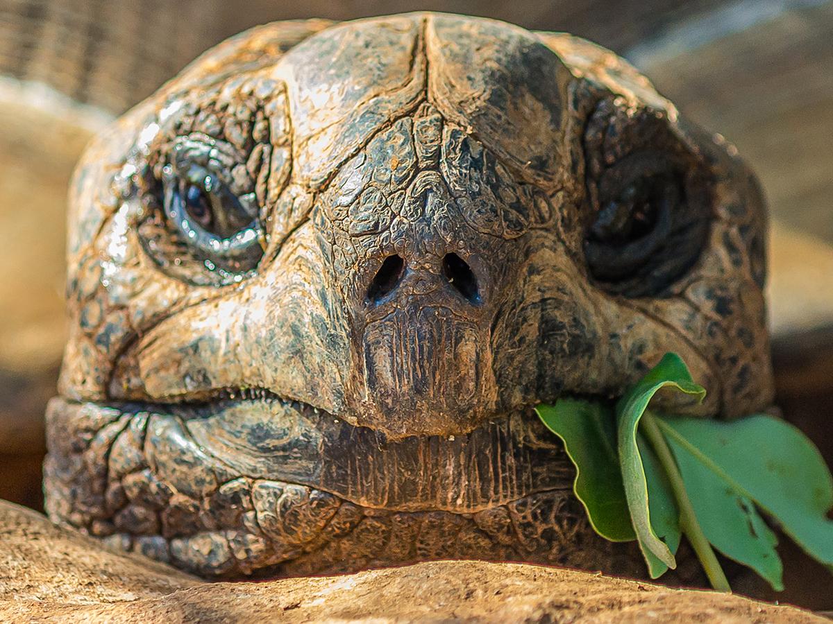 alimentazione tartarughe terra