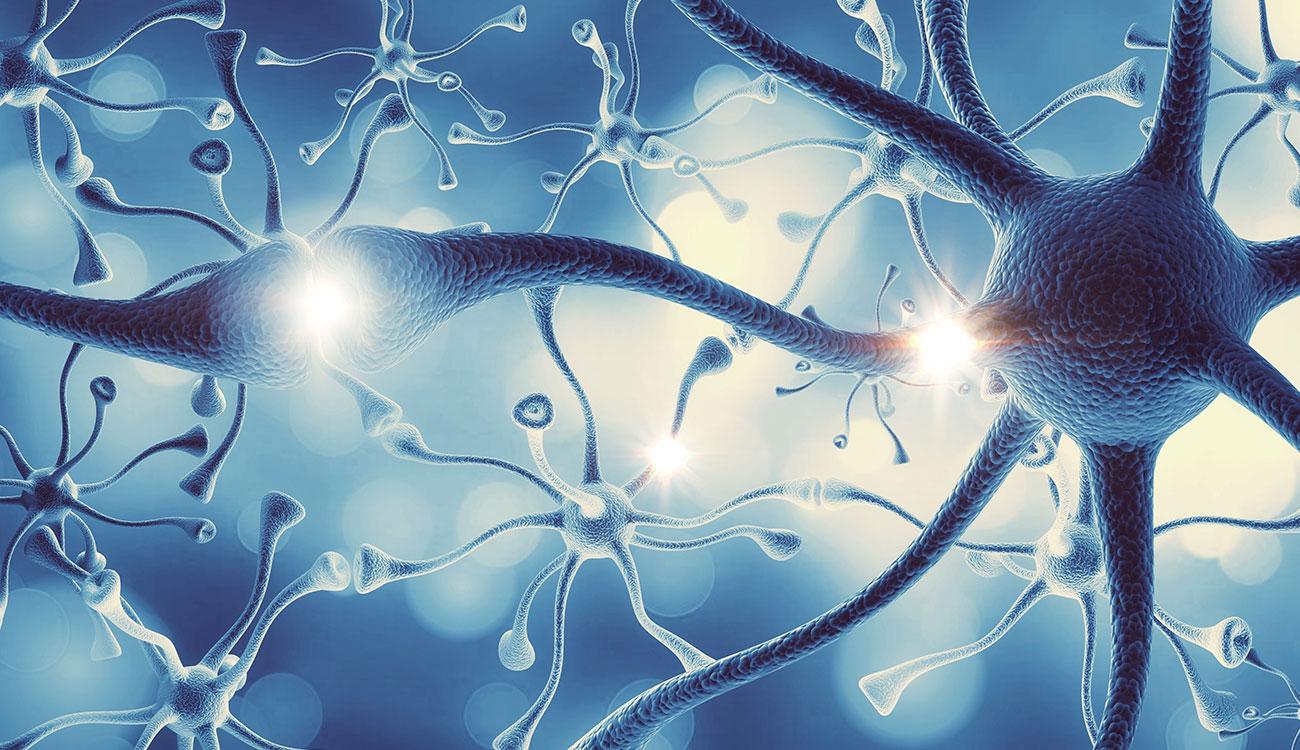 Neuroni con la corazza per combattere la sclerosi multipla