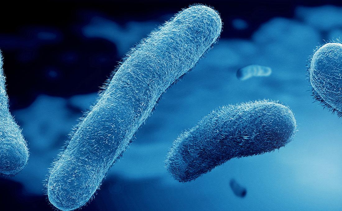 Batteri intestinali contro i tumori