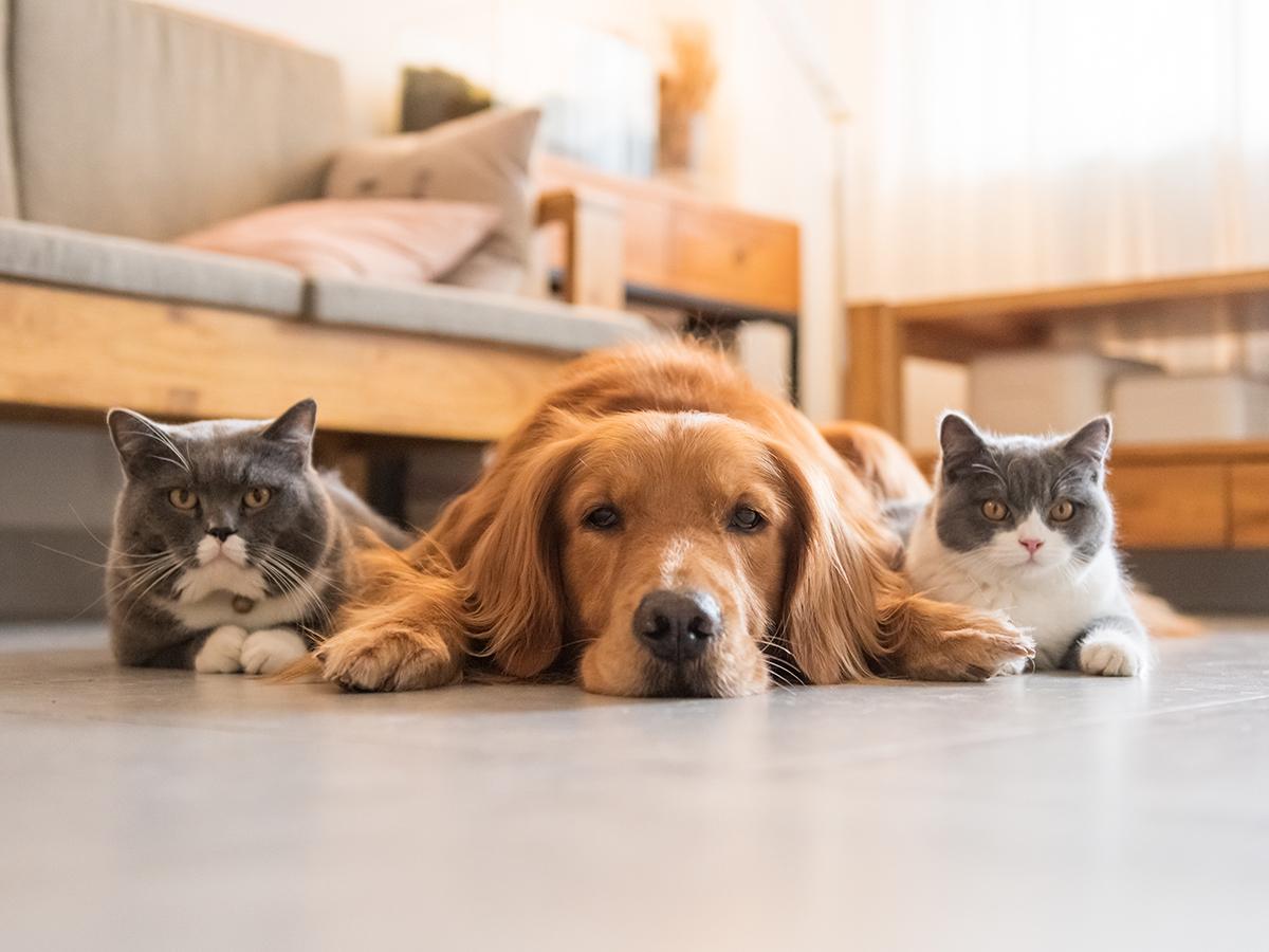 cura animali domestici - good pets