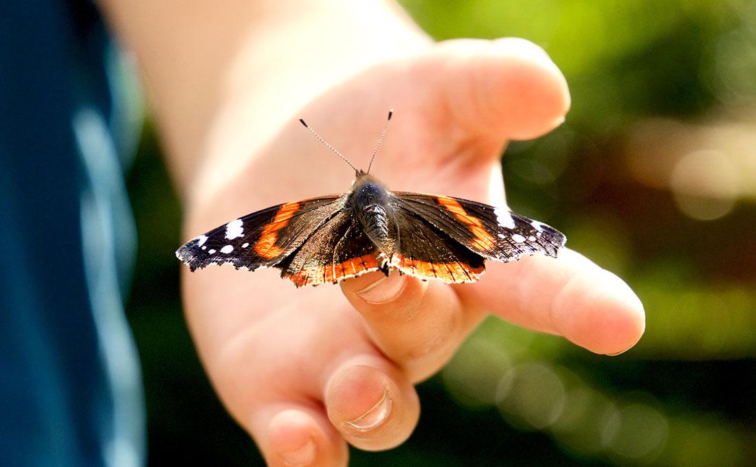Epidermolisi bollosa sindrome dei bambini farfalla