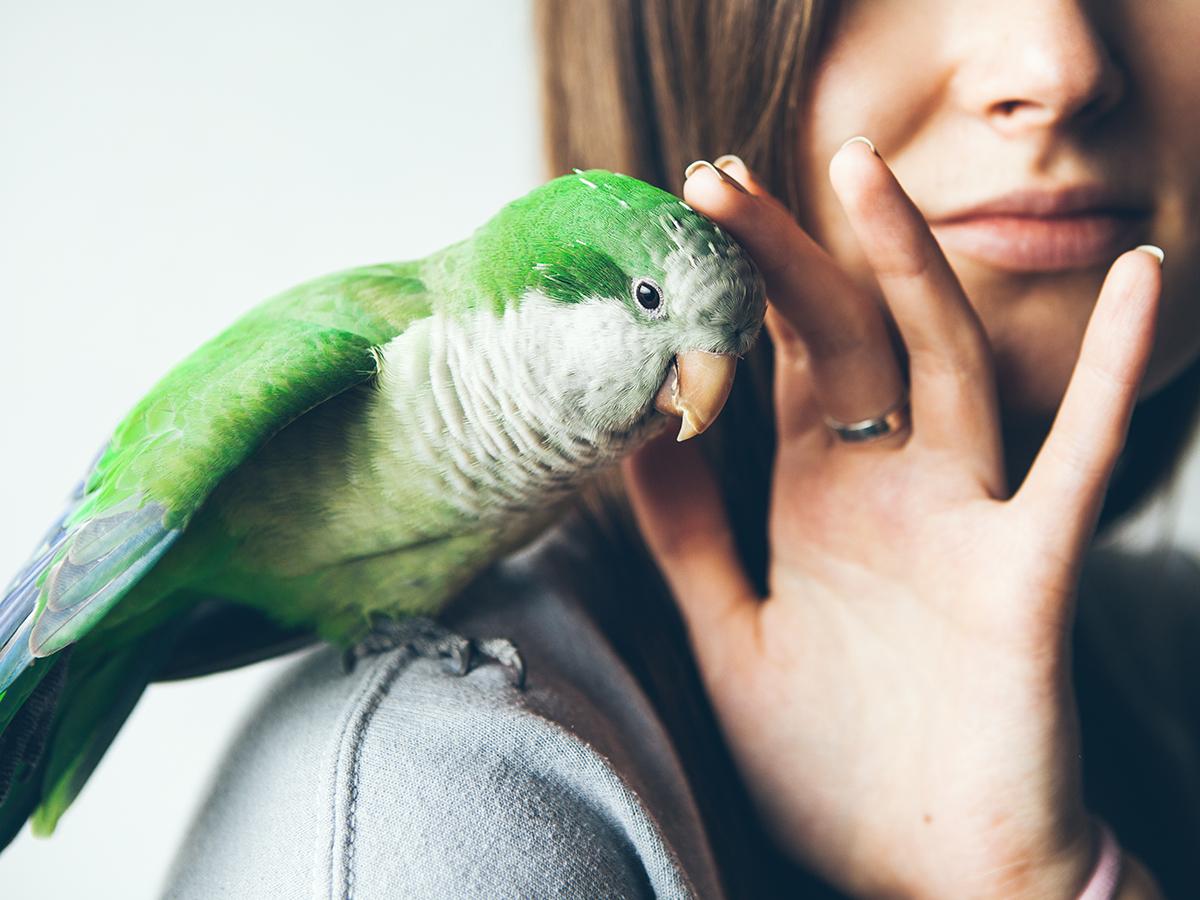 come addestrare pappagallo