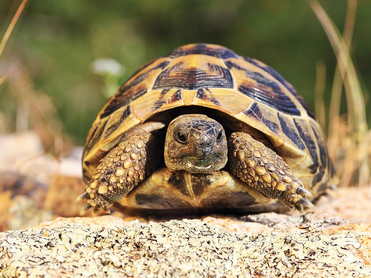 cura tartaruga terra