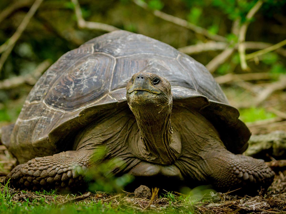 ritrovare tartaruga terra