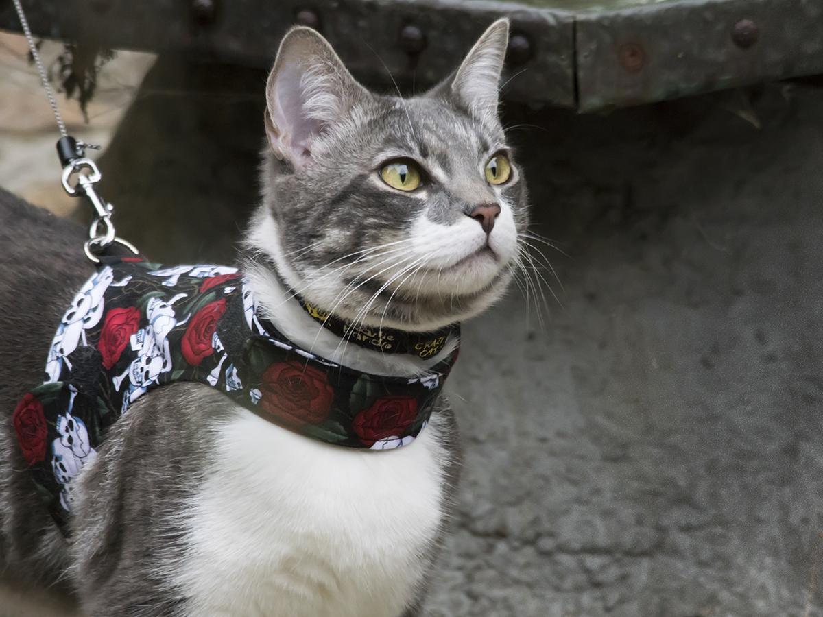 abituare gatto guinzaglio