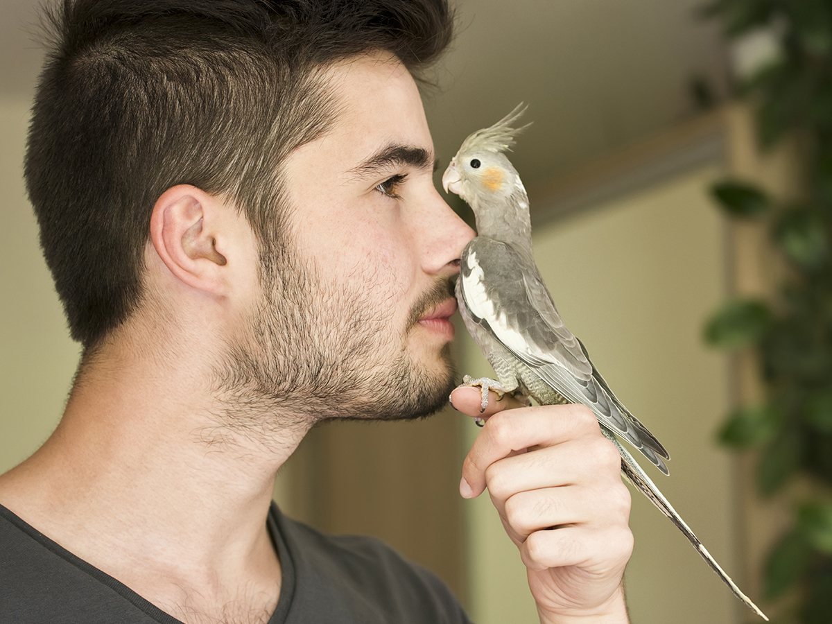 come comunica pappagallo